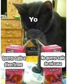 Gatos Cool, Mood, Cats, Instagram, Gatos, Cat, Kitty, Kitty Cats