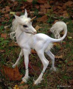 Baby Unicorn ♡ Unicorns and Dinosaurs ♡ Fantasy Art Magical Creatures, Fantasy Creatures, Fairytale Creatures, Mythological Creatures, Fairy Land, Fairy Tales, Fantasy World, Fantasy Art, Baby Animals