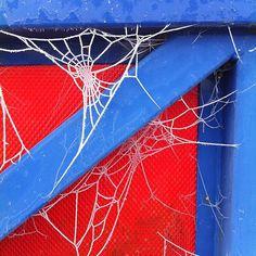 @conormcnicholas | More cobweb amazingness.