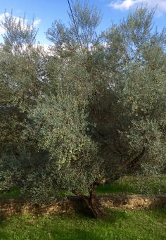 Good Morning from Melia's olive groves in Greece. Have a great new week!