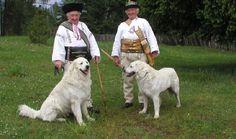 Týchto 5 krásnych plemien psov vyšľachtili na Slovensku a málokto o tom vie