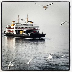 Instagram media by 12handanm04 - #Istanbul#Car_Ferry#Seagulls#_On_the_road_to_Bursa#Like#Smile!