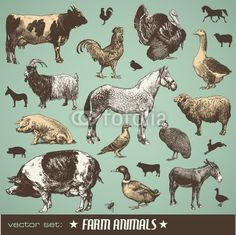 Vector: vector set: farm animals - various retro-style illustrations #vector #download #image #royalty #free #printable #scrap #scrapbook #scrapbooking #diy #paper #graphic #old #illustration #vintage #retro #antique #decorative #decor #decoration #page #book #design #ornament #ornate #woodcut #engraving #engraved #etching #print #element #ephemera #ancient