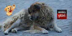 A murit Jimmy, catelul Cetatii Medievale cunoscut de turistii din toata lumea Dogs, Animals, Movies, Animales, Animaux, Pet Dogs, Doggies, Animal, Animais