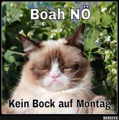 Kein Bock auf Montag.