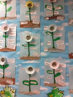 Parts of a Plant Project: Use tan or brown yarn for roots, green yarn or pipe cleaner for stem, cupcake liner for flower/petals, sunflower seeds for seeds, and cut-out leaves from green paper/card stock. Type and Print labels and job description for each part.