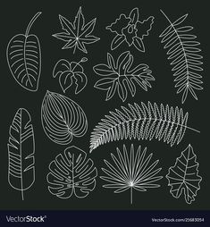 Tropical leaves floral tropical elements outline vector image on VectorStock Flower Line Drawings, Outline Drawings, Hand Embroidery Patterns, Machine Embroidery, Leaf Outline, Tropical Leaves, Tropical Plants, Leaf Drawing, Flower Doodles