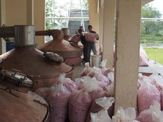 rose oil distillation - bulgaria