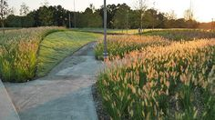 North Carolina Museum of Art  Park #landscape #architecture #design #civitas #nature #USA #2016