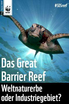 Schützt das Great Barrier Reef - mit Taten statt Worten! Unterschreibt jetzt die Petition: http://www.wwf.de/great-barrier-reef via @WWF_Deutschland