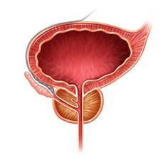 bladder and prostate