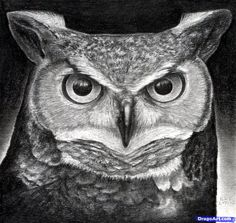 How to Draw a Great Horned Owl, Step by Step, Birds, Animals, FREE Online Drawing Tutorial, Added by finalprodigy, February 7, 2012, 10:16:26 pm