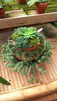 Succulent tower idea