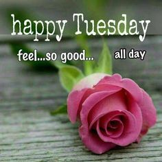 Good Morning Wishes Images Wallpaper Photo Pics on Tuesday Happy Tuesday Images, Happy Tuesday Morning, Good Morning Today, Good Morning Picture, Morning Pictures, Good Morning Wishes, Happy Day Quotes, Happy Tuesday Quotes, Morning Greetings Quotes