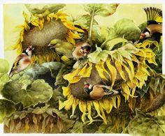 Коллекция картинок: Иллюстрации Bastin Marjolein 5(птички часть 1)
