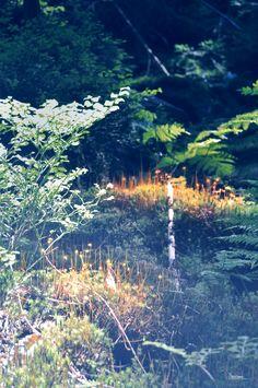 Avatar lesní krajina