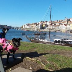 Porto BMW Motorad Pedro & Augusto have been showing us the local sites Traditional boats that cartied Port along the river   #PillionPooch #MadeToTravel #Cute #Dog #AdventureRider #DogsOnAdventures #AdventureDog #MotorcycleAdventure #PetTravel #BikerDog #PuppyLove #DogsOnBikes #BMW #DogAdoption #AdoptDontShop #MotoDog #Multi
