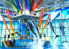 Sea World San Antonio, Photo Credit: Sea World San Antonio