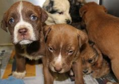"""""""Somebody must know who these puppies belong to, imagine if they had died from the cold; could you live with that on your conscience? If they have done it once, they will do it again...please help ..."""