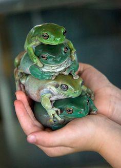 A Frog, on a Frog, on a Frog, on a Frog!!!! -- It's a Fist Full of Frogs!!!