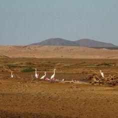 Desert birds #colombia #puntagallinas #animals #solitarysociety #travelcom