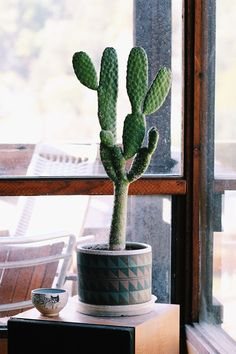 Cactus in a pot. House plants, green foliage and botanical design. Cool Plants, Green Plants, Air Plants, Indoor Plants, Indoor Cactus, Cactus E Suculentas, Cactus Planta, Belle Plante, Garden Web