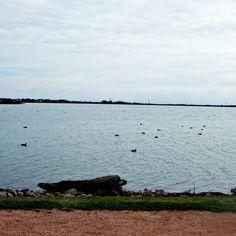 Ducks Photography Journal, Ducks, Mountains, Water, Travel, Outdoor, Gripe Water, Outdoors, Viajes