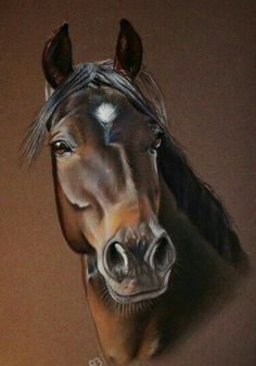 More equine art & inspiration www.pl Vitus ~ by AB-arts on… Pretty Horses, Horse Love, Beautiful Horses, Animals Beautiful, Horse Drawings, Animal Drawings, Art Drawings, Drawing Art, Drawing Ideas