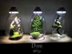 My latest design in the nanovivarium concept. Full set with special designed glass, 12W LED-grow light and micro fan.