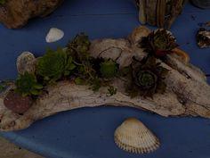 Gartendekoration - Schwemmholz Treibholz mit Hauswurz Deko - ein Designerstück…