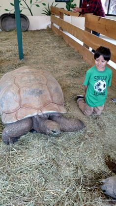 My 6 yr old son with 105 yr old tortoise. So Cool