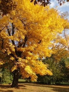 http://epulettar.hu/Content/Hir/20171008101026_budai_arboretum_keseru_hikoridio_a_felso_kertben2_1.jpg