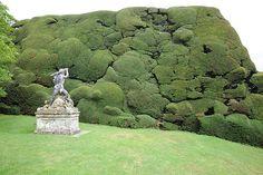 Taxus haag bij Powis Castle.