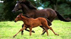 koník a hříbě