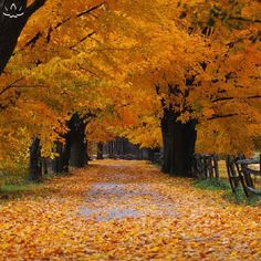 I REALLY hope we get some fall color in early October-our pictures will be so pretty!