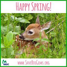 Spring Ahead, Spring Is Here, Vernal Equinox, Happy Spring, Bloom, Seasons, Poetry, Facts, Animals