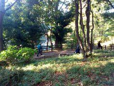 晩秋の有栖川宮公園。