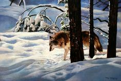 Tony Wooding - wolf in snow