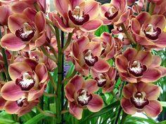 Cuidado de las orquídeas - Douglas Candelario  http://www.douglascandelario.com/blogs/jardineria