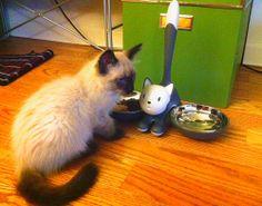 tigrito gamelle à chat