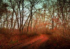 Просто осень - Осенняя дорога в лесополосе.