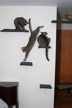 This is for you Sherry! Cat Wall Shelf Carpeted set of 4 1 large 3 small by TheKatShack