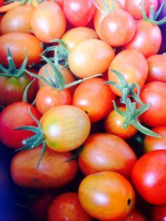 #byuh #garden #tomato