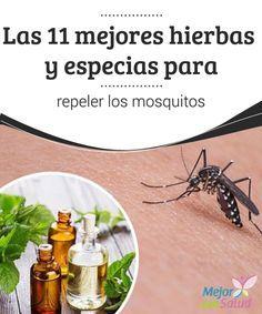 Las 11 mejores hierbas y especias para repeler los mosquitos Los mosquitos son pequeños insectos que se alimentan de sangre. Estos son bastante peligrosos porque pueden trasmitir enfermedades graves como la malaria, el dengue o la fiebre amarilla, entre otros.