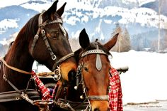 Impressionen Winter in Kitzbühel Horses, Winter, Animals, Winter Time, Animales, Animaux, Horse, Words, Animal