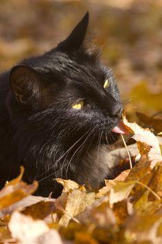 gatinhamel:    Tasting the leaves by Megan Noble