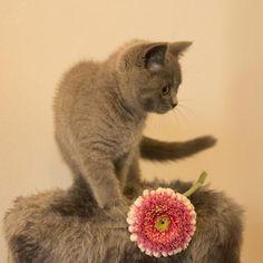 Remedios caseros para los ácaros en gatos