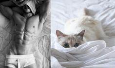 """Série """"Des Hommes et des Chatons"""", """"Hot Guys and Cats"""". - Cerca con Google"""