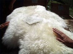 How to Tan Sheepskins. A lovely idea, could really help bring out a more natural theme in a home.