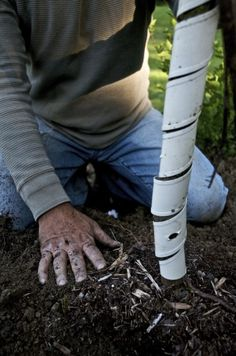 Tree Protection Against Deer: Protecting Newly Planted Trees From Deer